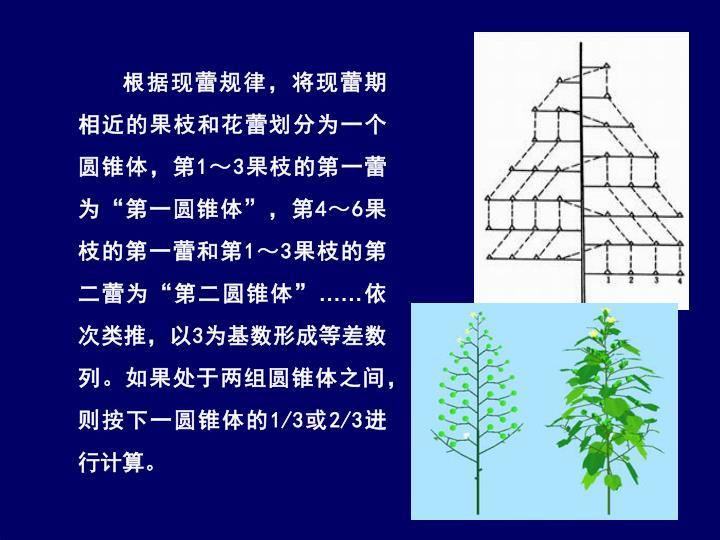 根据现蕾规律,将现蕾期相近的果枝和花蕾划分为一个圆锥体,第