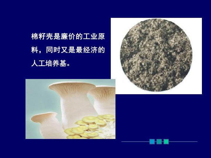 棉籽壳是廉价的工业原料,同时又是最经济的人工培养基。