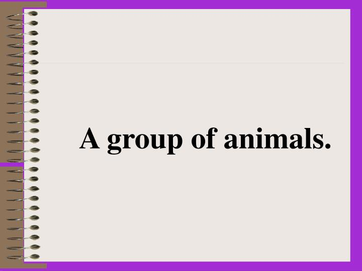 A group of animals.