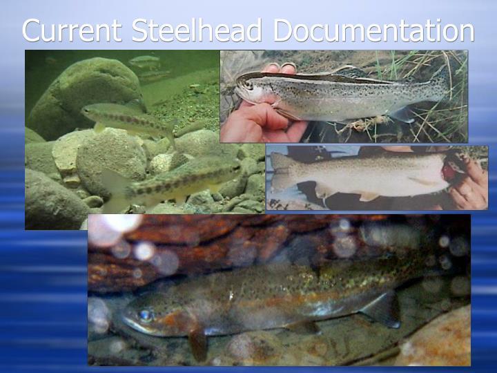 Current Steelhead Documentation