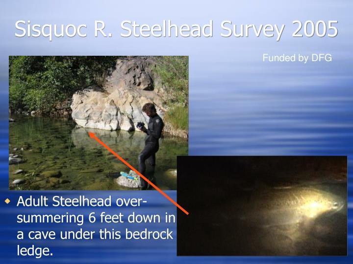 Sisquoc R. Steelhead Survey 2005