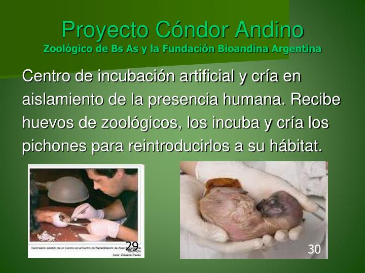 Proyecto Cóndor Andino