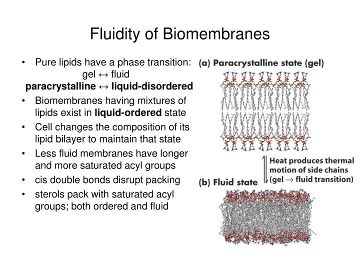 Fluidity of Biomembranes