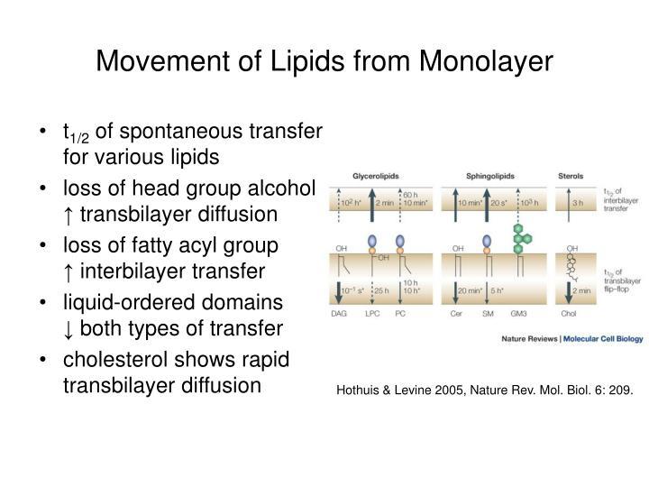 Movement of Lipids from Monolayer