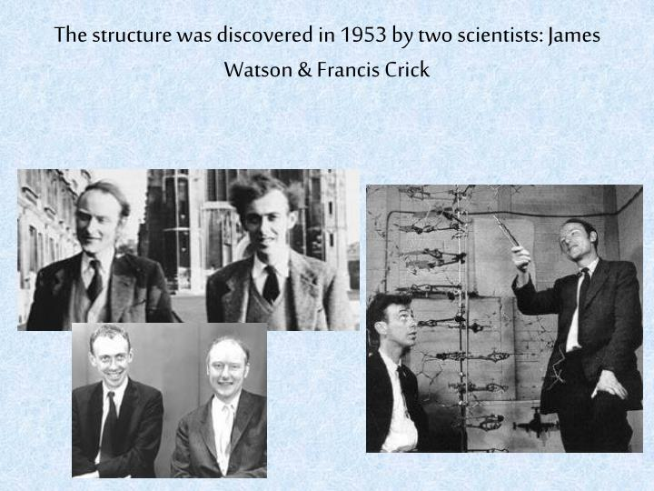 The structure was discovered in 1953 by two scientists: James Watson & Francis Crick