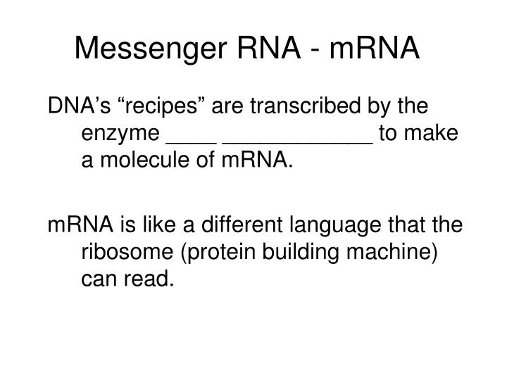 Messenger rna mrna
