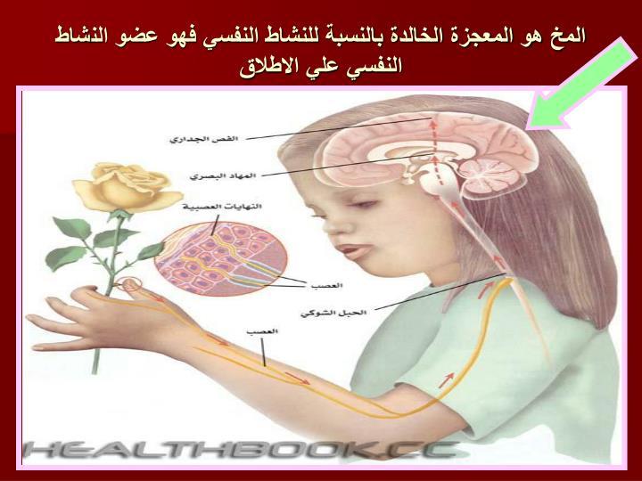 المخ هو المعجزة الخالدة بالنسبة للنشاط النفسي فهو عضو النشاط النفسي علي الاطلاق