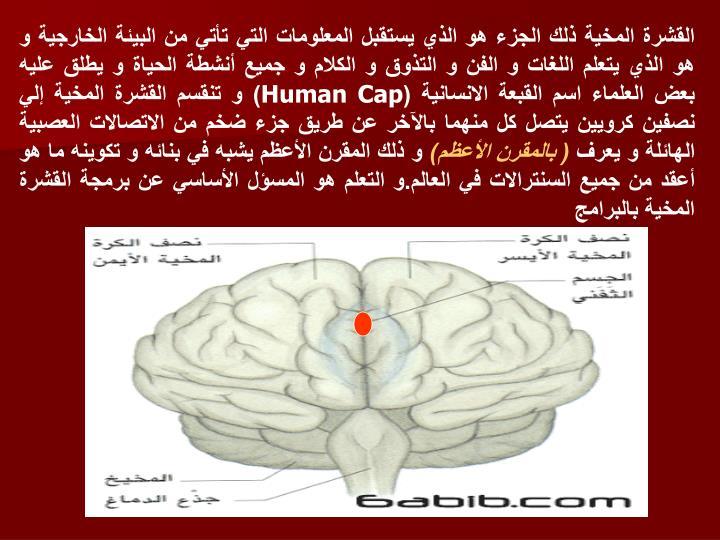 القشرة المخية ذلك الجزء هو الذي يستقبل المعلومات التي تأتي من البيئة الخارجية و هو الذي يتعلم اللغات و الفن و التذوق و الكلام و جميع أنشطة الحياة و يطلق عليه بعض العلماء اسم القبعة الانسانية (