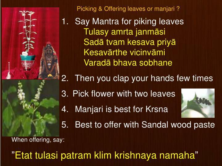 Picking & Offering leaves or manjari ?