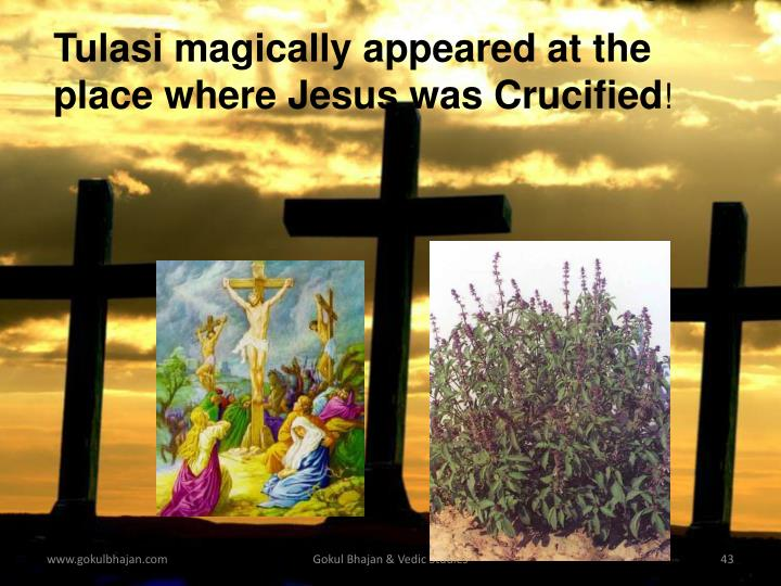 Tulasi magically appeared at the
