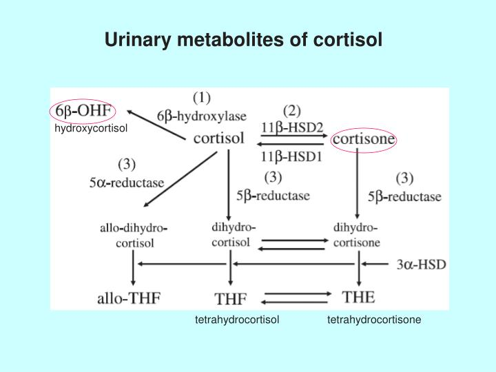 hydroxycortisol