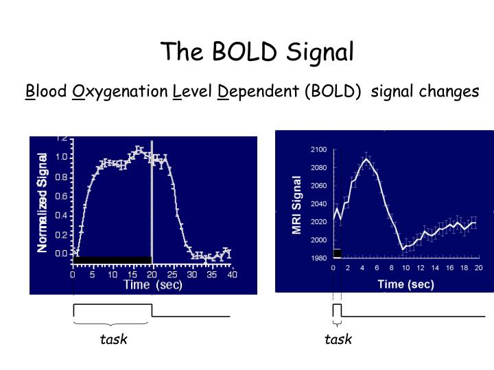 The BOLD Signal