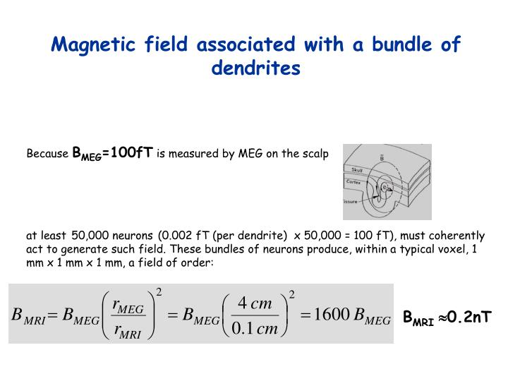 Magnetic field associated with a bundle of dendrites