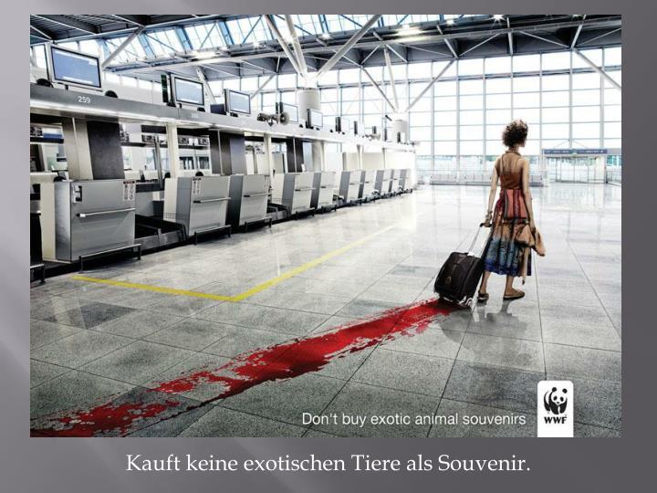 Kauft keine exotischen Tiere als Souvenir.