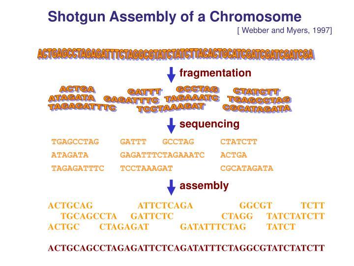 Shotgun Assembly of a Chromosome