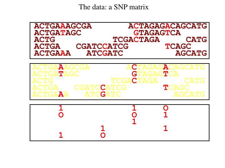The data: a SNP matrix