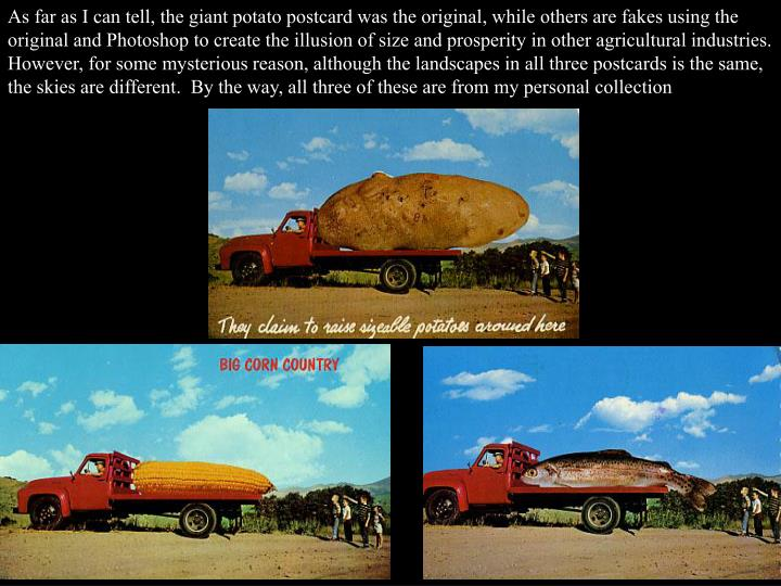 As far as I can tell, the giant potato postcard was the original, while others are fakes using the original and Photoshop to create the illusion of size and prosperity in other agricultural industries.  However, for some mysterious reason, although the landscapes in all three postcards is the same, the skies are different.  By the way, all three of these are from my personal collection