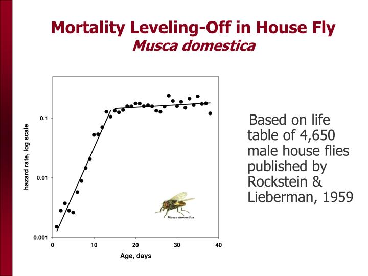Mortality Leveling-Off in House Fly