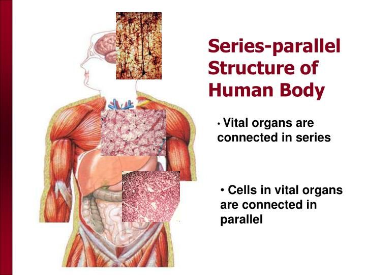 Series-parallel Structure of Human Body