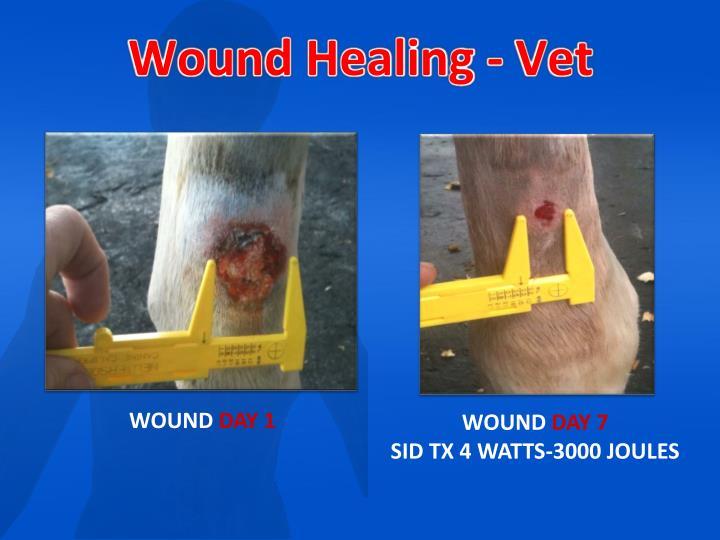Wound Healing - Vet