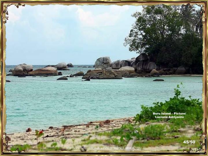Buru Island - Picture: Luciana Adriyanto