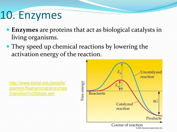 10. Enzymes