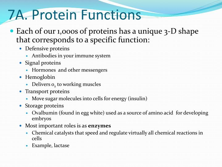 7A. Protein Functions