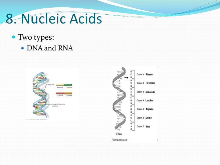 8. Nucleic Acids
