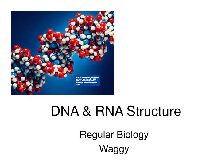 Dna rna structure