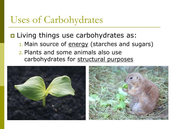 Uses of Carbohydrates