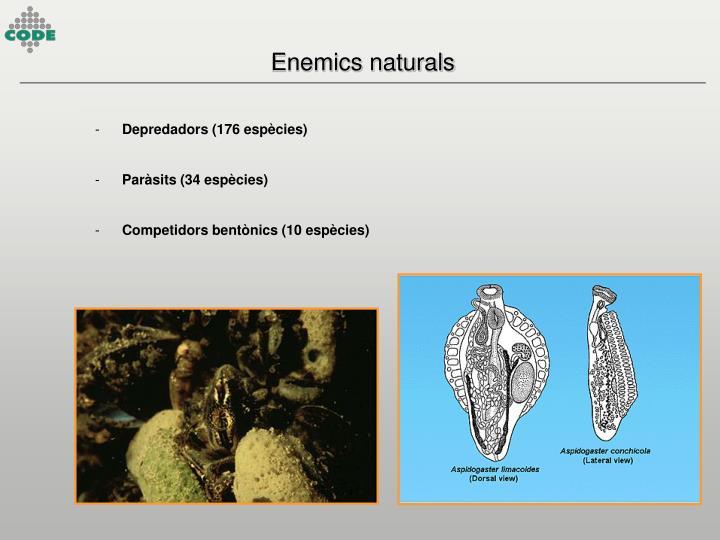 Enemics naturals