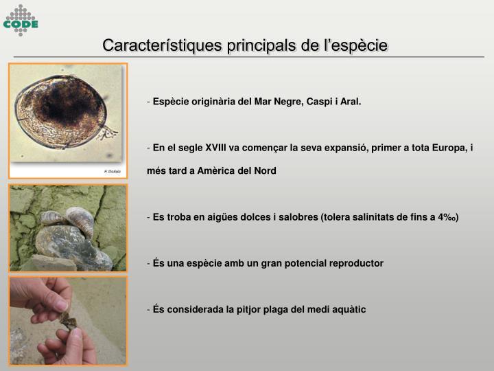 Característiques principals de l'espècie