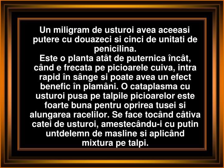 Un miligram de usturoi avea aceeasi putere cu douazeci si cinci de unitati de penicilina.