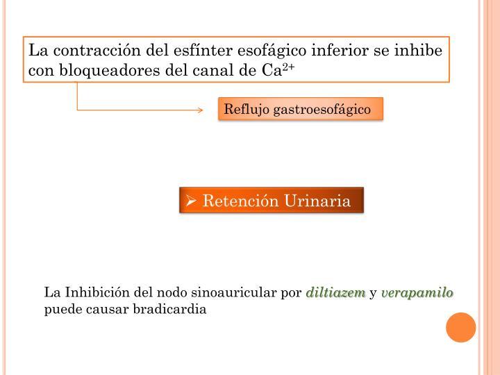 La contracción del esfínter esofágico inferior se inhibe con bloqueadores del canal de Ca