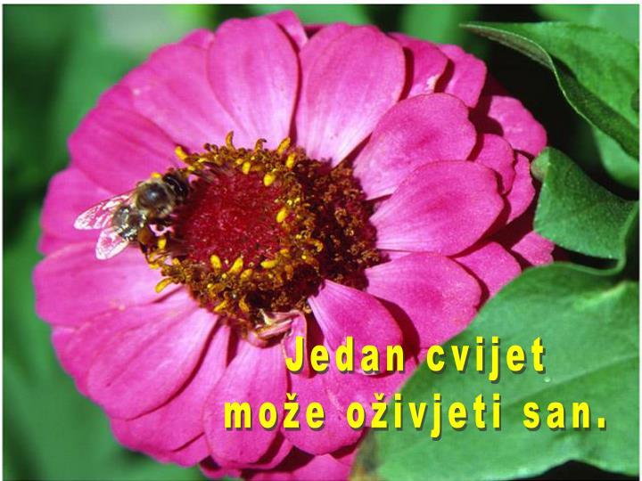 Jedan cvijet