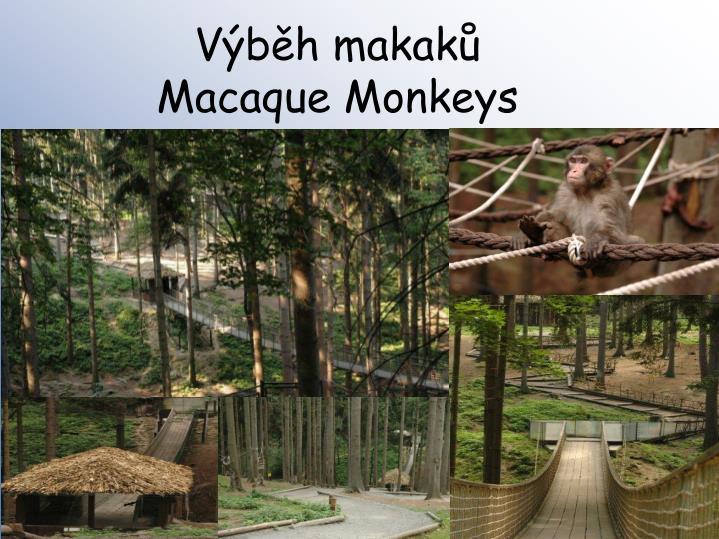 Výběh makaků