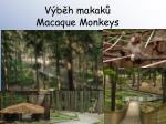v b h makak macaque monkeys