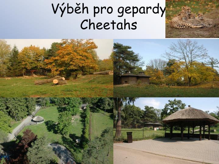 Výběh pro gepardy