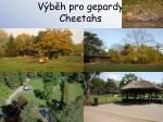 v b h pro gepardy cheetahs