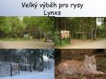 velk v b h pro rysy lynxs