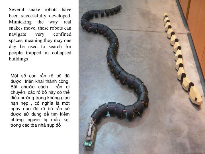 Several snake robots have been successfully developed. Mimicking the way real snakes move, these robots can navigate very confined spaces, meaning they may one day be used to search for people trapped in collapsed buildings