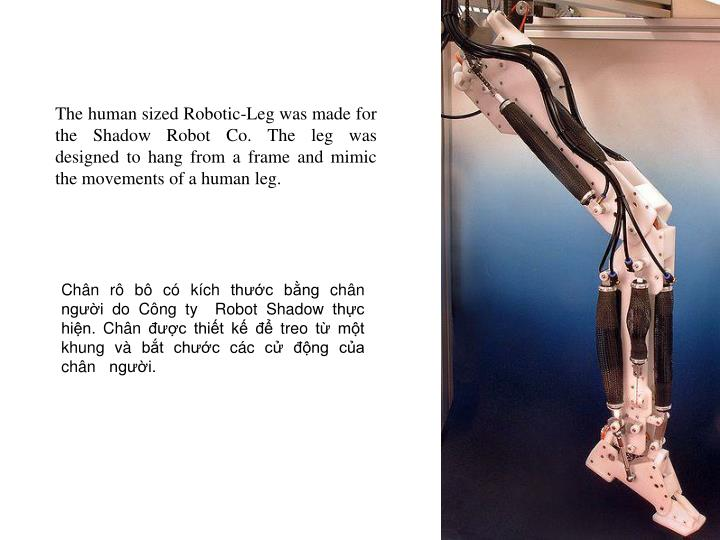 The human sized Robotic-Leg was made for the Shadow Robot Co. The leg was designed to hang from a frame and mimic the movements of a human leg.