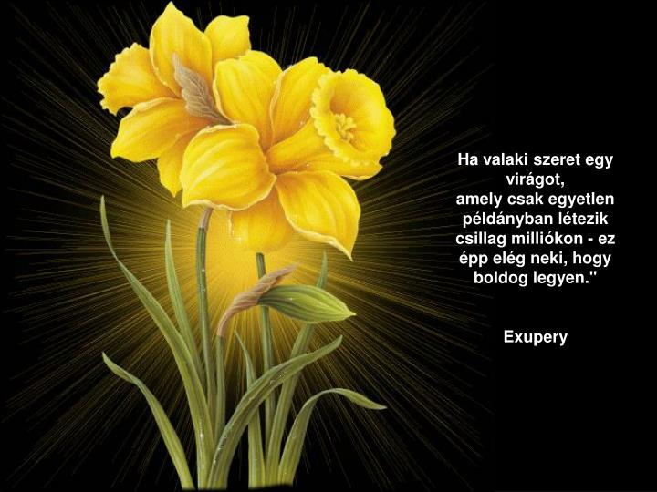 Ha valaki szeret egy virágot,