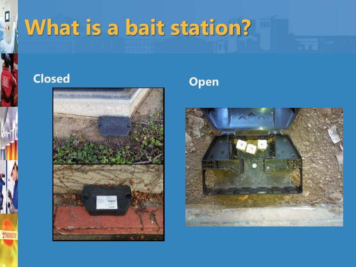 What is a bait station?