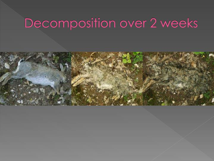 Decomposition over 2 weeks