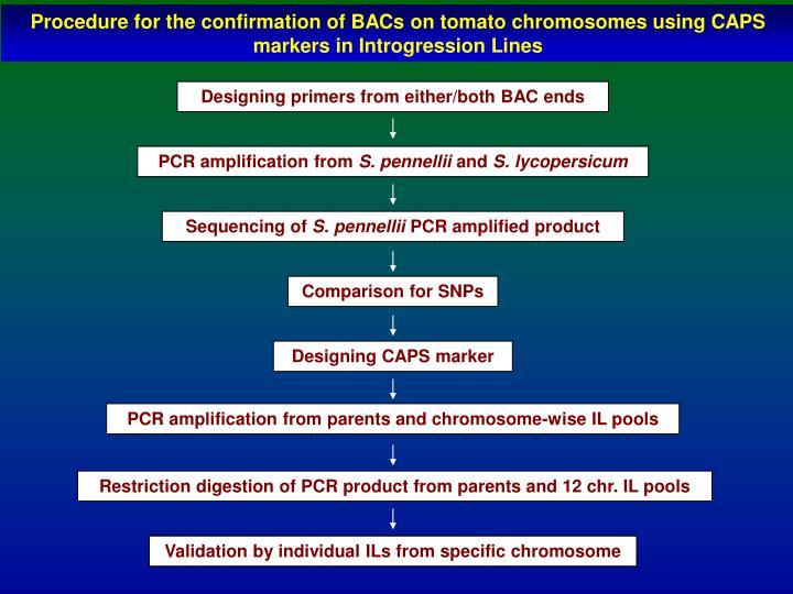 Designing primers from either/both BAC ends