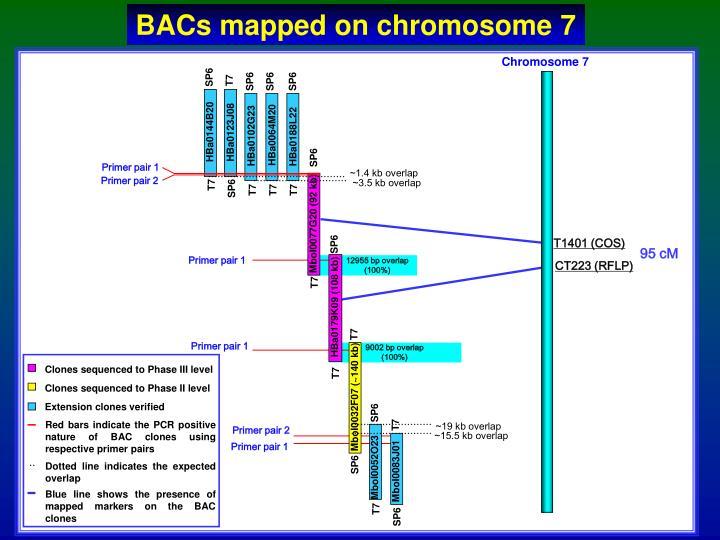 BACs mapped on chromosome 7