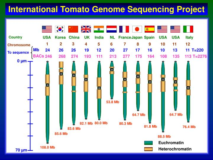 International Tomato Genome Sequencing Project
