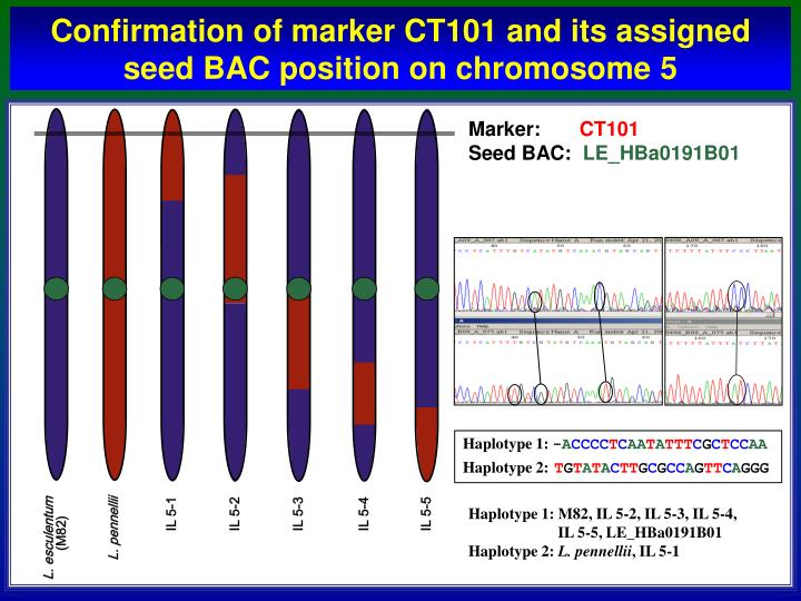Confirmation of marker CT101 and its assigned seed BAC position on chromosome 5