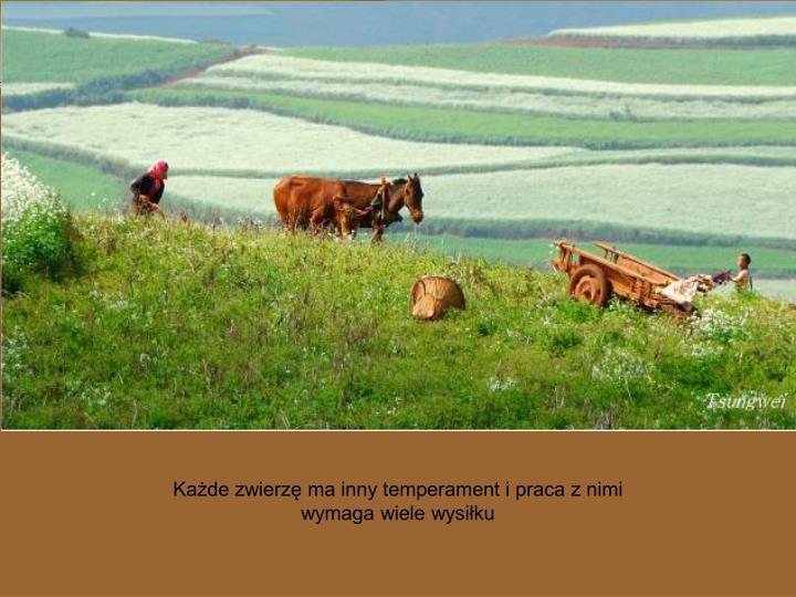 Każde zwierzę ma inny temperament i praca z nimi wymaga wiele wysiłku